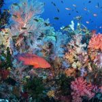 5 Places You Need to See in Raja Ampat-Indonesia